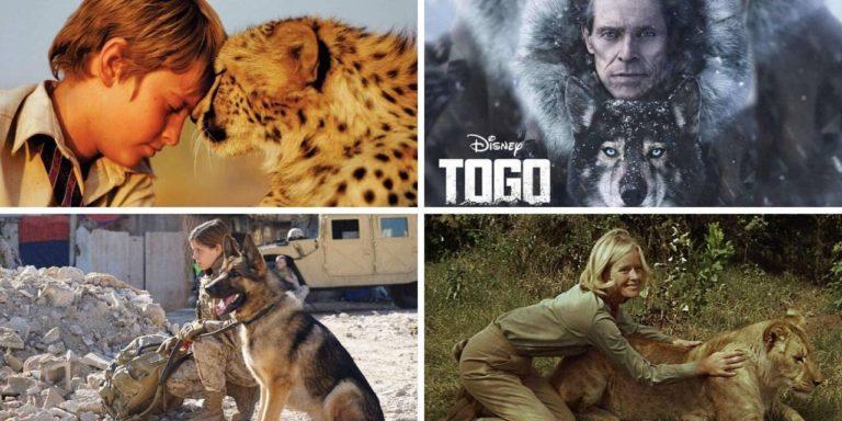 13 Najboljih filmova o povezanosti ljudi i životinja